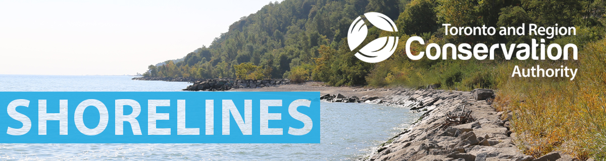 Shorelines newsletter banner