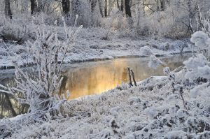 Course: Naturally Mindful – Winter Session @ Kortright Centre for Conservation