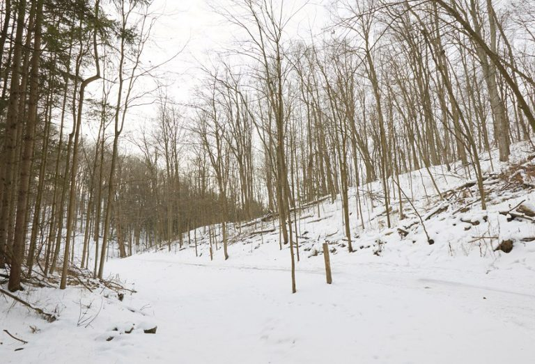 Kortright hiking trail in winter