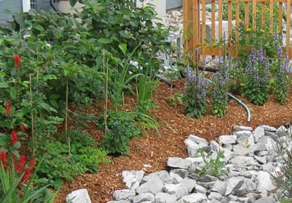 Archetype Sustainable House rain garden at Kortright Centre