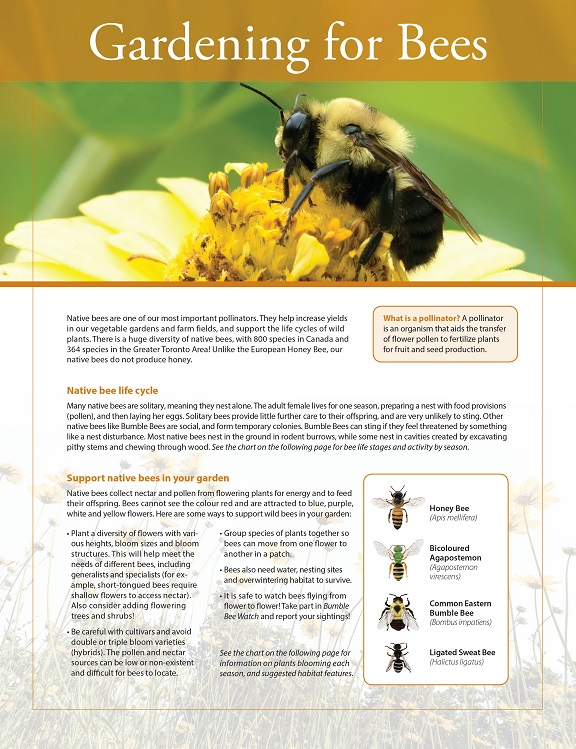 front page of TRCA Gardening for Bees fact sheet