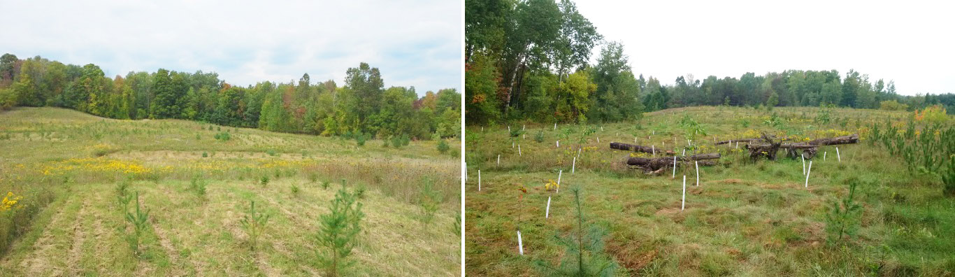 Bolton Resource Management Tract reforestation project