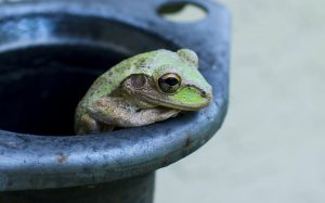 Frog Watch: Waitlist @ Heart Lake Conservation Park