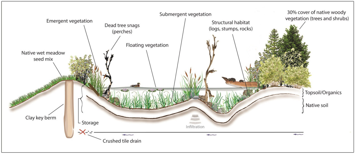 cross-sectional diagram of wetland