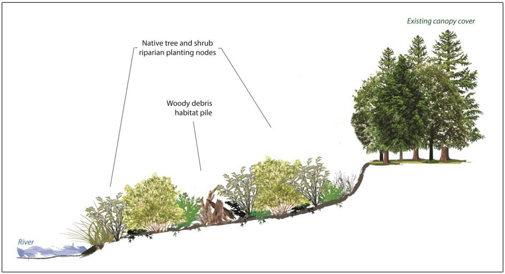 cross-sectional diagram of Riparian planting