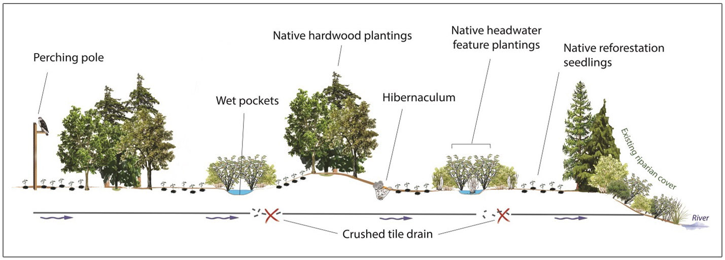 diagram showing cross-section of enhanced reforestation techniques