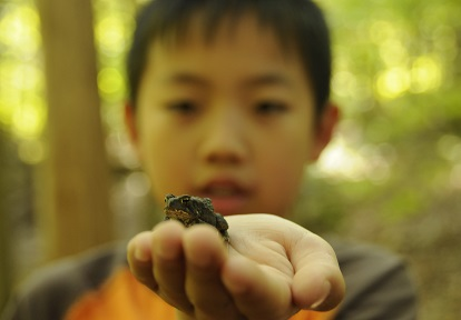young boy holds frog at Lake St George summer nature camp