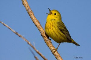Bird Sounds: Understand Your Feathered Neighbours @ Online Webinar - Ages 6+