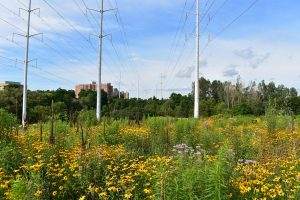 Hike Through The Meadoway in Rouge Park @ Twyn Rivers Parking Lot