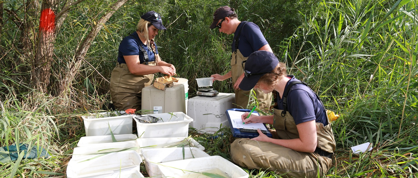 TRCA environmental monitoring team members conduct fish identification in the field