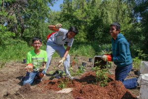 Youth Volunteer Event: Tree Maintenance at Austin Drive Park @ Austin Drive Park (meet at Markham Rugby Club)