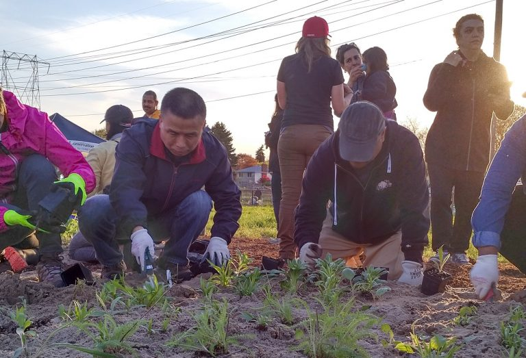 community members at pollinator planting event