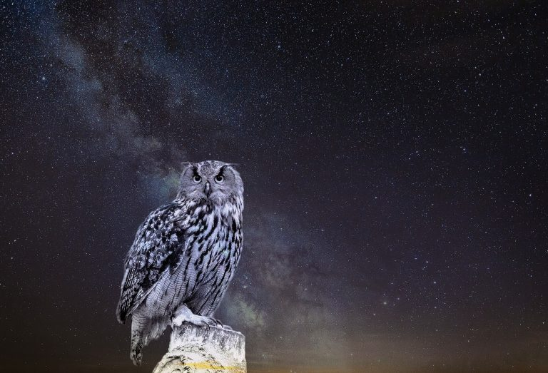 Owl and night sky