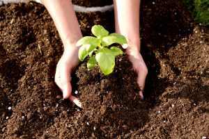Introduction to Vegetable Gardening @ Online Webinar - General Audiences