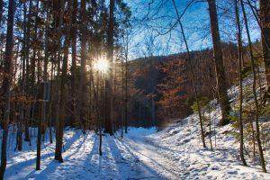 Winter Wonders @ Online Webinar - Ages 6+