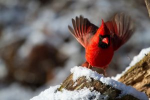 Winter Backyard Bird Feeding @ Online Webinar - Ages 6+
