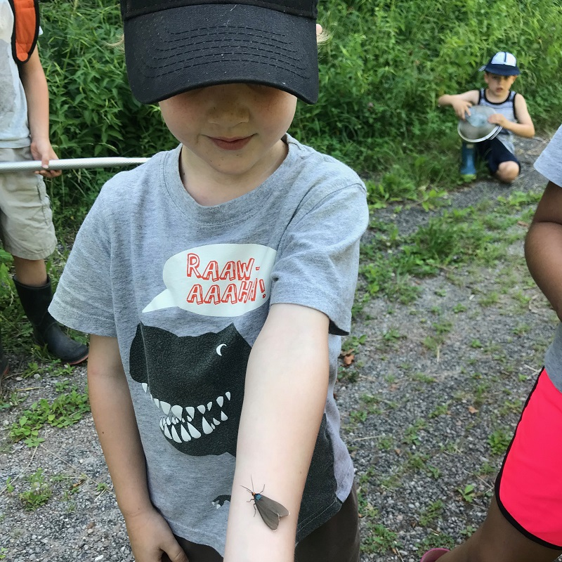 camper encounters large insect at Claremont Nature Centre