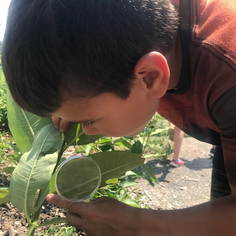 camper with magnifying glass examines caterpillar on leaf at Claremont Nature Centre