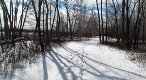 Winter Wander @ Tommy Thompson Park