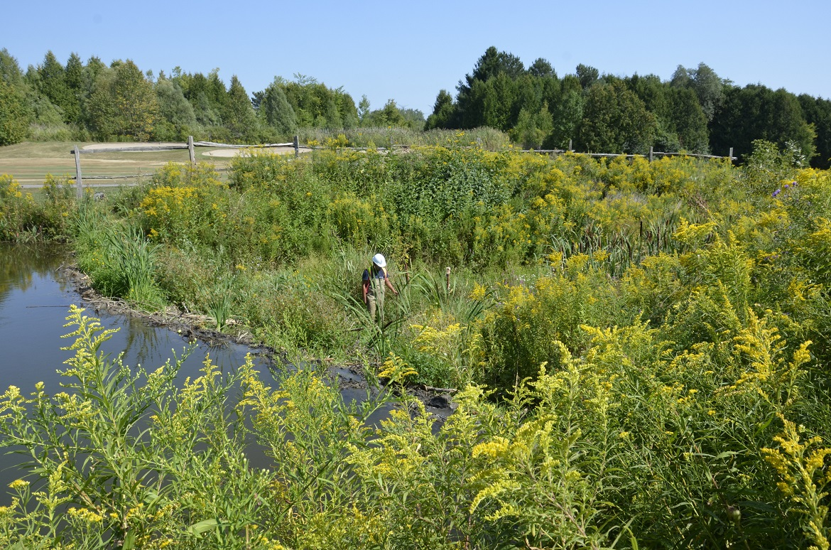 TRCA staff member assesses a natural barrier beaver dam