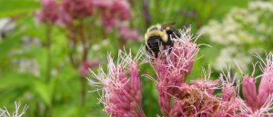 Workshop: Bees @ Kortright Centre for Conservation