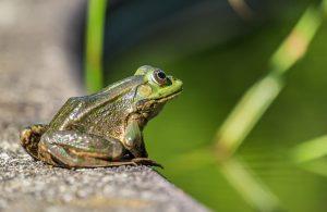 POSTPONED: Frog Watch @ Oak Ridges Community Centre