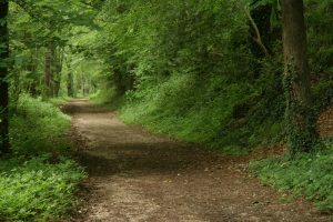Hike the Headwaters @ Oak Ridges Corridor, Bethesda trailhead parking lot