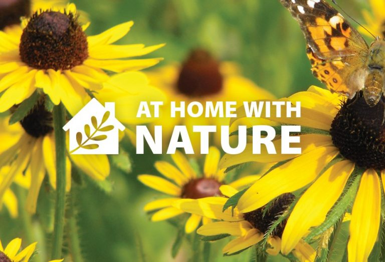 Magic in The Meadoway - At Home With Nature