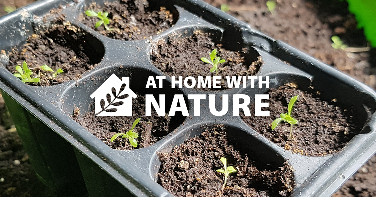 At Home With Nature - Germination