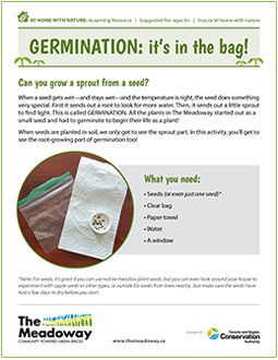cover page of The Meadoway germination e-learning worksheet