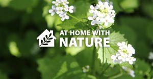 Invasive Plants @ Online Facebook - General Audiences