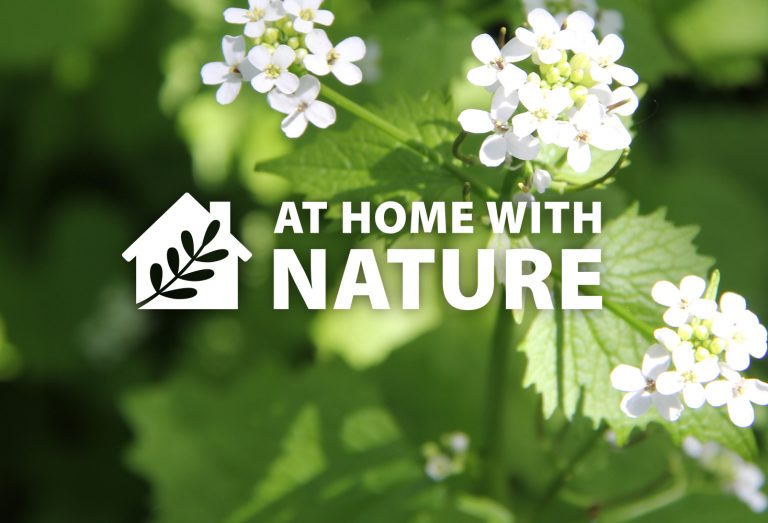 At Home With Nature - Invasive Species