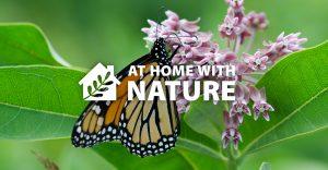 Monarchs and Milkweed @ Online Facebook - General Audiences