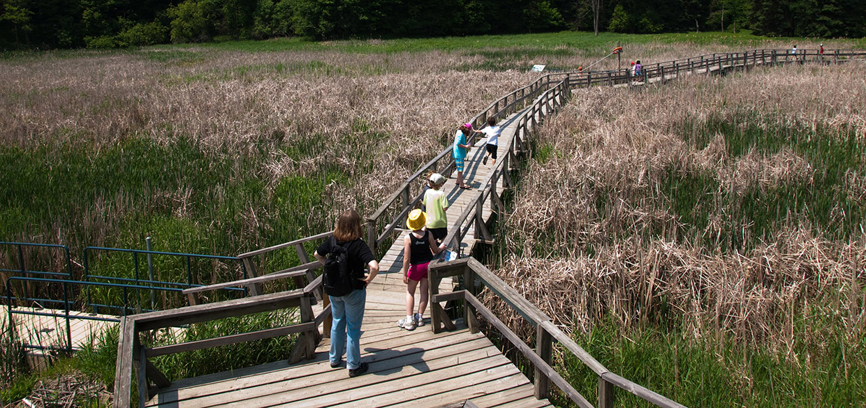 school group on wetland boardwalk at Kortright Centre