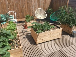 Sustainable Balcony Gardening @ Online Webinar