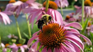 Pollinators: Small but Mighty @ Online Webinar - Ages 6+
