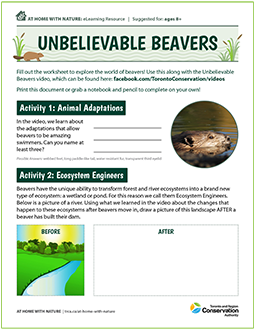 cover page of Unbelievable Beavers e-learning resource