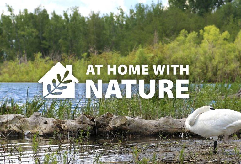 At Home With Nature - Making Marshes
