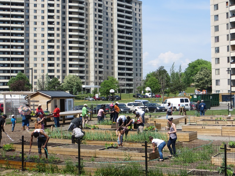 residents participate in community gardening at San Romanoway Towers