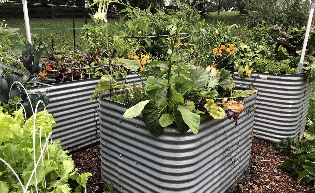 vegetable garden with planter boxes