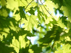 Green Infrastructure Standards Development and Soil Cell Evaluation @ Online Webinar