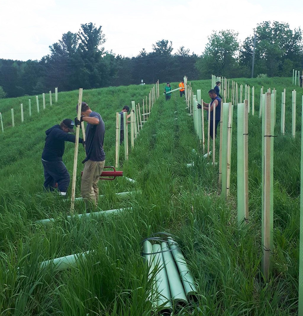 TRCA reforestation crew plants stakes in ground on rural property
