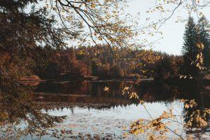 Fall Colours @ Online webinar