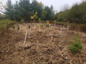 Community Tree Planting @ Town of Ajax