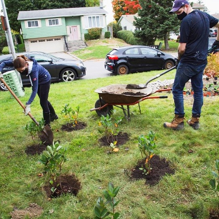 West Bolton SNAP Green Home Makeover homeowners and neighbours plant native species on their property