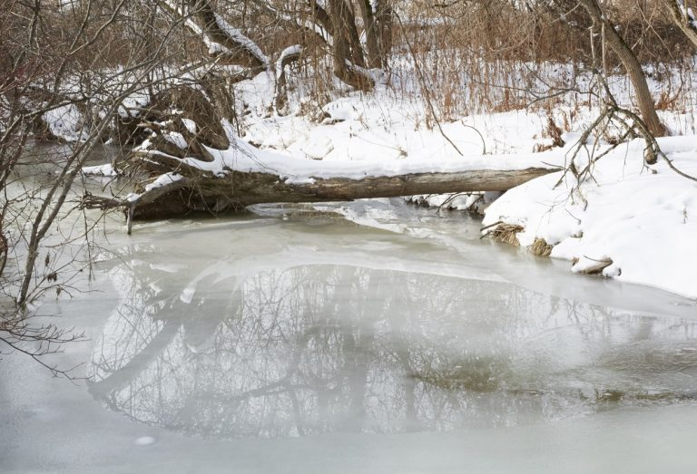 ice on stream at Kortright Centre
