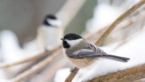 Creating Bird Habitat @ Online Webinar