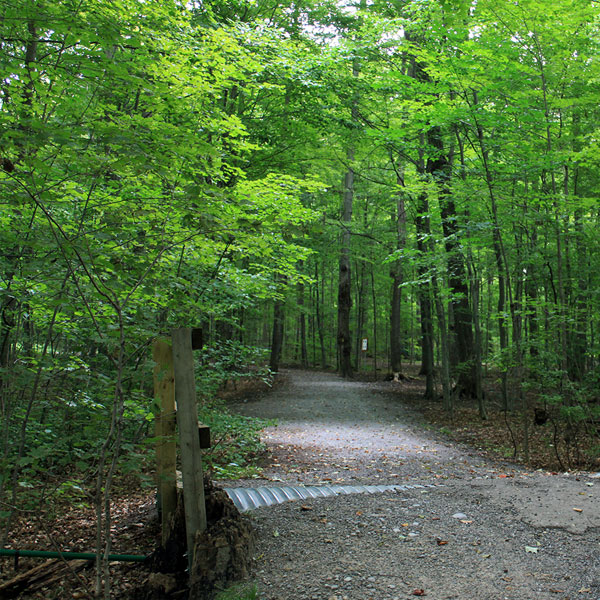 hiking trail at bruces mill conservation park