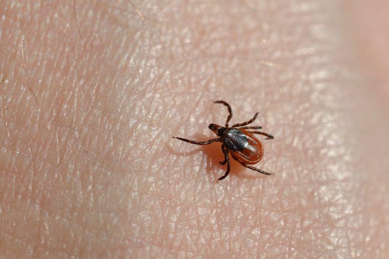 A blacklegged tick on someone's skin